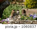 スズメ,ラブラブ,自然,動物,夫婦,鳥 1060837