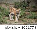 虎とらトラ 1061778