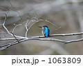 カワセミ 1063809