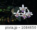 暗がりでひっそりと咲く小さな蘭 1084650