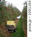 りんご狩り 1091164