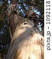 ユーカリノキ 1092118