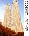 都庁の秋 1093091