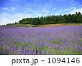 富良野 フラノ 彩香の里の写真 1094146