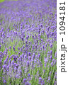 背景素材 フラノ 一面花畑の写真 1094181
