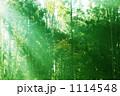 原生林 陽射し 光芒の写真 1114548