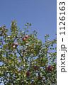 農業 りんご 1126163