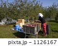 農業 りんご 1126167
