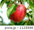 リンゴ 1128986