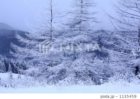 冬山 1135459
