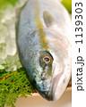 ブリは出世魚、このサイズはツバスと呼びます。 1139303