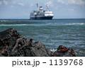 イグアナ は虫類 ウミイグアナの写真 1139768