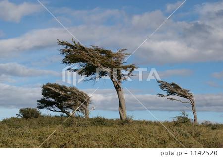 斜めの木 1142520