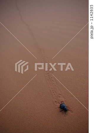 サハラ砂漠のフンコロガシ 1142635
