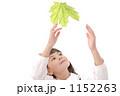 緑の葉 サトウカエデ 女の子の写真 1152263