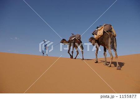 サハラ砂漠のラクダ引き 1155877