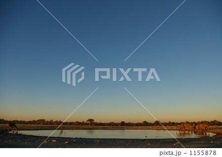 水場に集まるゾウとキリン 1155878