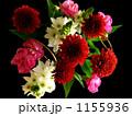 flower キク 花の写真 1155936