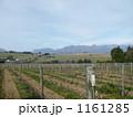 南アフリカのワイナリー 1161285
