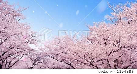 桜 1164883