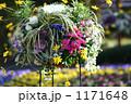 ハンキングの花 1171648