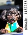 ミックス犬 ドッグ ペットの写真 1182288