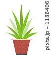 20100301_観葉植物 1186406