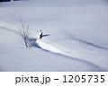 雪原の木立 1205735