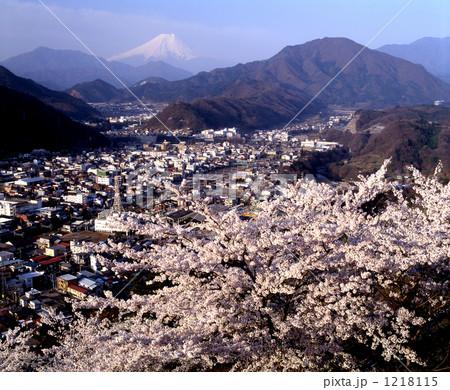 ソメイヨシノと富士山 1218115