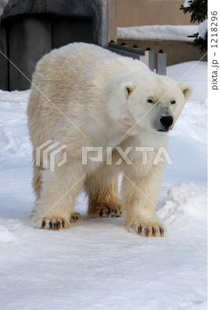 白熊 1218296
