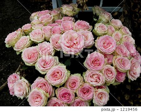 ピンクと白のグラデーションが美しいバラの花束 1219456