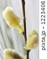 春を呼ぶネコヤナギの花 1223406