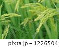 蜘蛛の巣 クモの巣 クモの写真 1226504