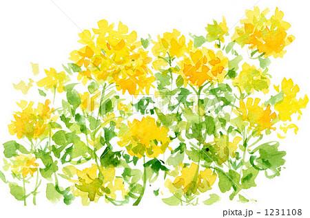 菜の花2010のイラスト素材 1231108 Pixta