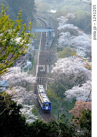 関西本線 笠置の桜 1241205