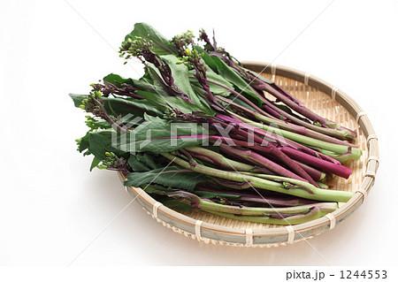 近年人気の中国野菜コウサイタイ 1244553