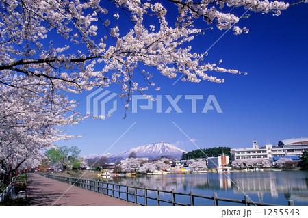 春の高松の池と岩手山 1255543