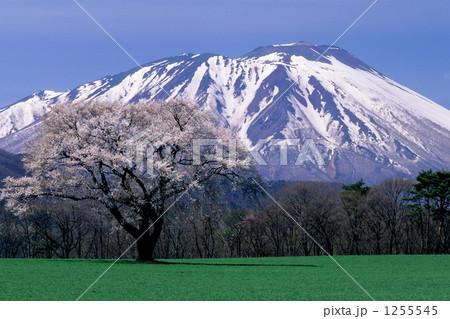 一本桜と岩手山 1255545
