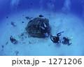 水中撮影 スキューバダイビング 水中の写真 1271206