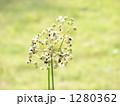 にらの種 1280362