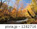 紅葉の奥入瀬渓流 1282716