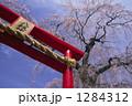 鳥居 桜 青空の写真 1284312