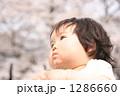 桜と子供 1286660