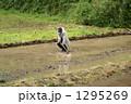 男 人物 農作業の写真 1295269