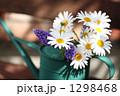 春のマーガレット 1298468