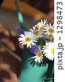春のマーガレット 1298473