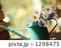 春のマーガレット 1298475