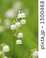 すずらん 植物 花の写真 1300468