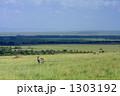 草原のシマウマ 1303192