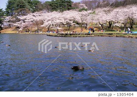 春の高松の池 1305404